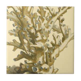 Coral by the Sea Ceramic Tile