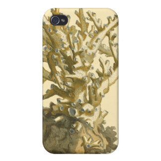 Coral by the Sea Covers For iPhone 4