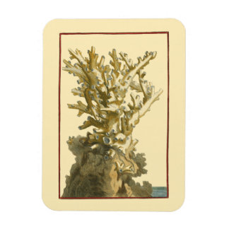 Coral by the Sea Magnet