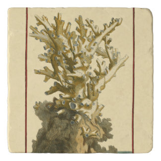 Coral by the Sea Trivet
