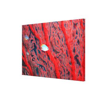 coral canvas prints