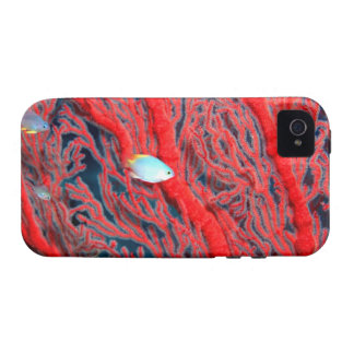 coral Case-Mate iPhone 4 cover