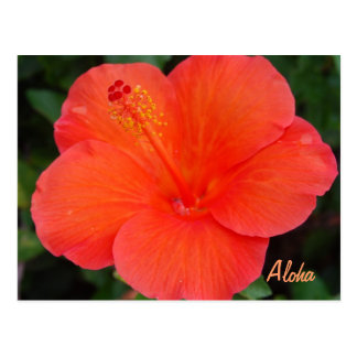 Coral Colored Hibiscus Postcard