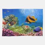 Coral colorido y pescados tropicales