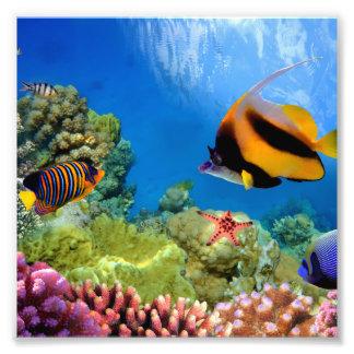 Coral colorido y pescados tropicales cojinete