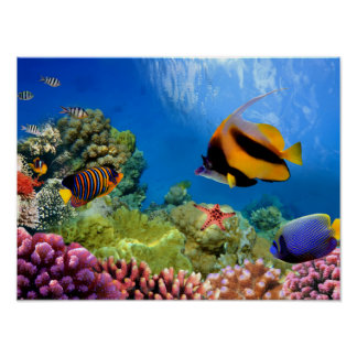 Coral colorido y pescados tropicales impresiones