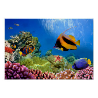 Coral colorido y pescados tropicales posters