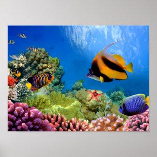 Coral colorido y pescados tropicales póster