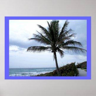 Coral Cove Beach Print