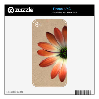 Coral Daisy on Shell background Decal For iPhone 4