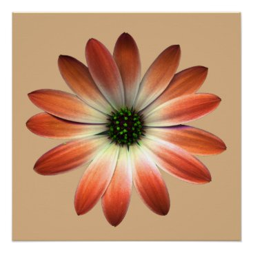 Coral Daisy on Shell background Poster