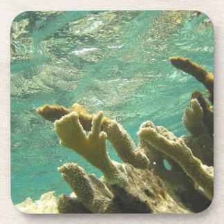 Coral de Elkhorn en las llaves de la Florida Posavasos De Bebidas