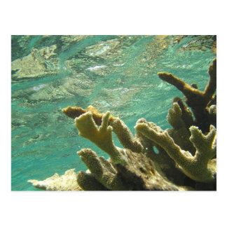 Coral de Elkhorn en las llaves de la Florida Postal