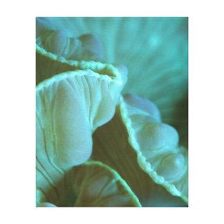 Coral del Fox - la colección del filón Impresión De Lienzo