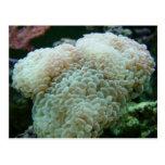 Coral del martillo tarjeta postal