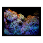 Coral el mar de los posters subacuáticos de la fau