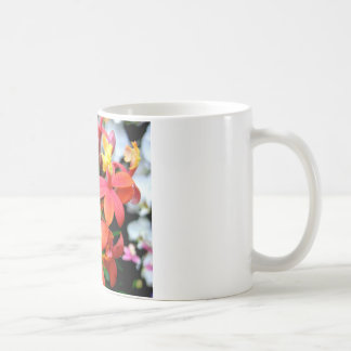Coral Epidendrum Orchids Mug