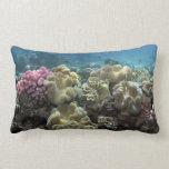 Coral, filón de Agincourt, la gran barrera de Cojín Lumbar