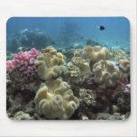 Coral, filón de Agincourt, la gran barrera de cora Alfombrillas De Ratón
