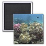 Coral, filón de Agincourt, la gran barrera de cora Iman De Frigorífico