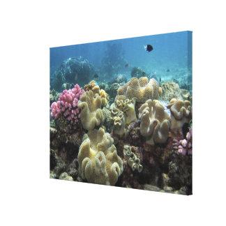 Coral, filón de Agincourt, la gran barrera de cora Lona Envuelta Para Galerias