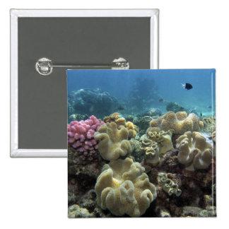 Coral, filón de Agincourt, la gran barrera de cora Pin Cuadrado