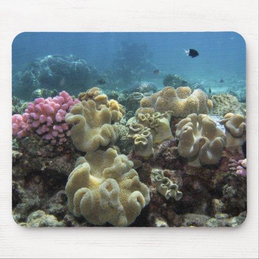 Coral, filón de Agincourt, la gran barrera de cora Tapete De Ratones
