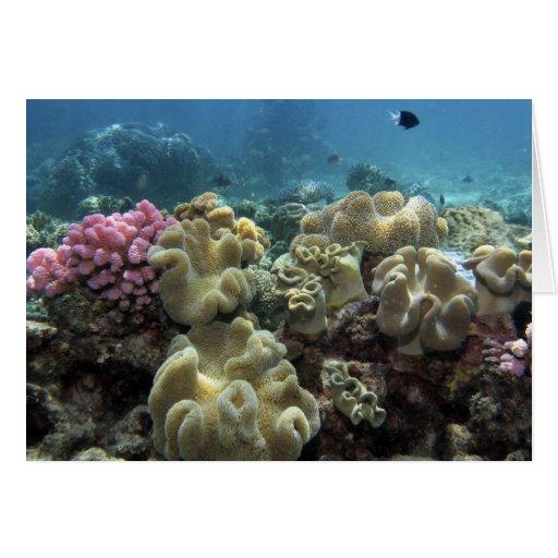 Coral, filón de Agincourt, la gran barrera de cora Tarjeta De Felicitación