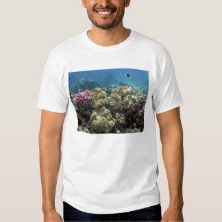 Coral, filón de Agincourt, la gran barrera de Polera