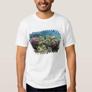 Coral, filón de Agincourt, la gran barrera de Remera