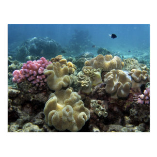 Coral, filón de Agincourt, la gran barrera de Postal
