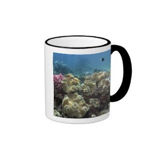 Coral, filón de Agincourt, la gran barrera de Taza De Dos Colores