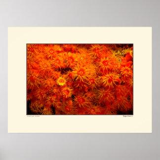 Coral floral - Bonaire Póster