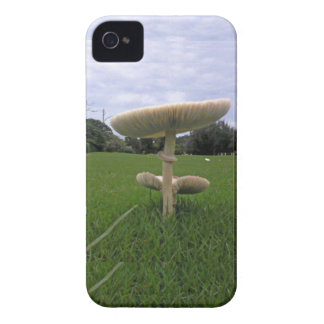 Coral Gables's Mushroom. iPhone 4 Case-Mate Cases