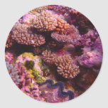 Coral_Garden--parte igualmente 2-0 de la Etiquetas Redondas