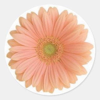 Coral Gerbera Daisy Sticker