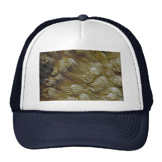 Coral hermoso de la porcelana gorras