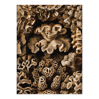 Coral Hexacoralla in Browns Card