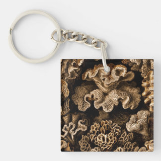Coral Hexacoralla in Browns Keychain