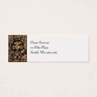 Coral Hexacoralla in Browns Mini Business Card
