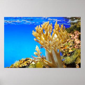 Coral in a aquarium poster