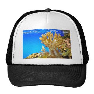 Coral in a aquarium trucker hat
