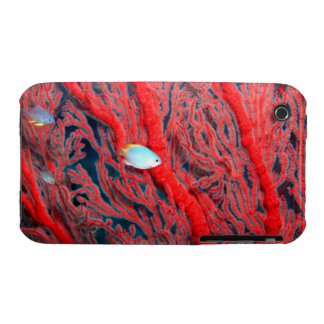 coral iPhone 3 Case-Mate cases