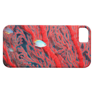 coral iPhone 5 cases