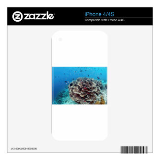 Coral Island Decals For iPhone 4S