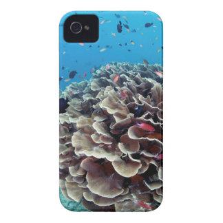 Coral Island iPhone 4 Case