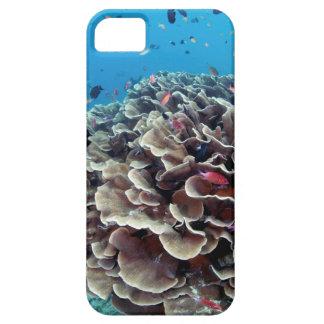 Coral Island iPhone SE/5/5s Case