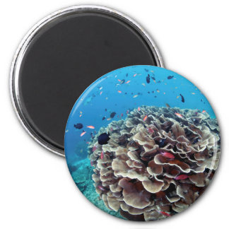 Coral Island Magnet