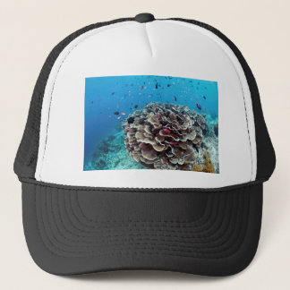 Coral Island Trucker Hat