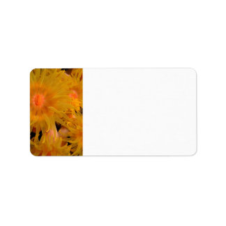 CORAL PERSONALIZED ADDRESS LABEL